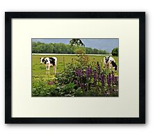 The Cows In The Meadow Framed Print