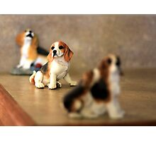 Beagles in a Row Photographic Print