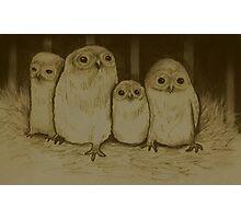 Owlets Photographic Print