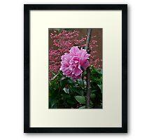 Peony & Astilbe Framed Print