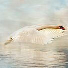 Swan Song by hampshirelady