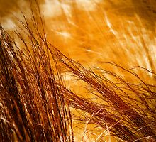 Prairie Winds by Catherine Fenner