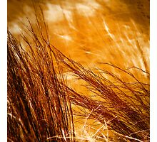 Prairie Winds Photographic Print