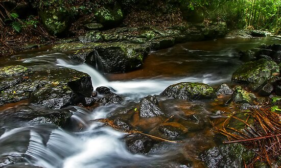 Cedar Creek by Mark  Lucey