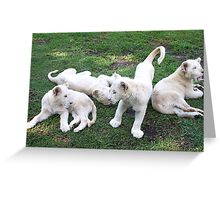White Lion Cubs Playing Greeting Card