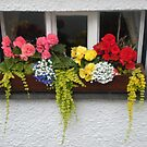 FLOWER BOX by Lynn Wright