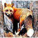 ~ Foxfire ~ by Alexandra  Lexx