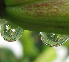 Garden Reflections in Raindrops by Ginny York
