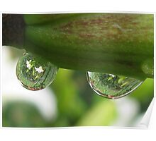 Garden Reflections in Raindrops Poster