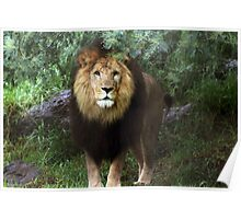 Lion girl Poster