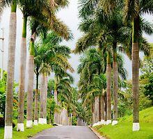 Palm Line by Guatemwc