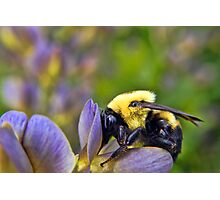 Sweet Sweet Pollen Photographic Print