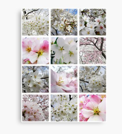 Cherry Blossoms Montage 1 Canvas Print