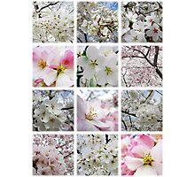 Cherry Blossoms Montage 1 Photographic Print