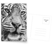 Mr Tiger Postcards