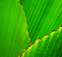Green Leaf by jswolfphoto