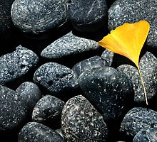 Yellow Leaf by jswolfphoto