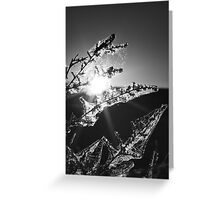 Light Catchers Greeting Card