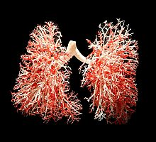 Real lungs - Respiratory system by MagicRoundabout