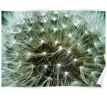 You can wish on a dandelion gone to seed Poster