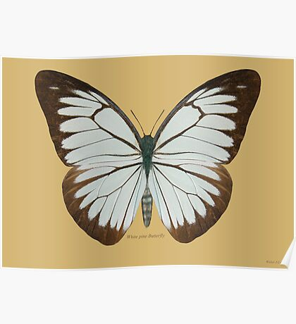 White Pine Butterfly Poster