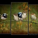 Triptych of Superb Fairy Wrens by Barb Leopold