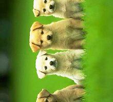 4 Cute Puppies iPhone case by Jnhamilt
