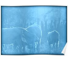 Cows in Blue Poster