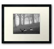 Three Ducks in the Morning Mist, Northamptonshire, England Framed Print