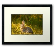 Bunnies And Bokeh Framed Print