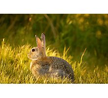 Bunnies And Bokeh Photographic Print