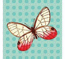 Yellow Red Butterfly Photographic Print