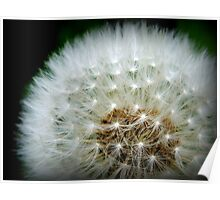 A white puffy dandylion is the kind you will need.  Poster