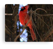 Lonely Red Bird  Canvas Print