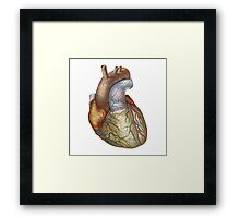 Heart, anatomically correct Framed Print