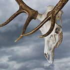 Elk Skull with Rack against a Cloudy Sky by Randall Nyhof