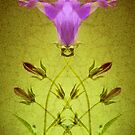 Campanula Crossover by Donna-R