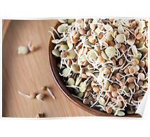Sprouted Lentils Poster