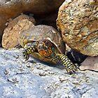 Camouflage Turtle  by Susan S. Kline