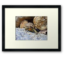 Camouflage Turtle  Framed Print