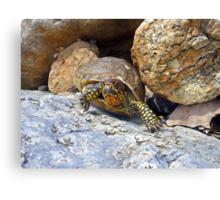 Camouflage Turtle  Canvas Print