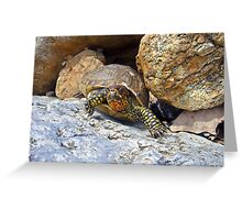 Camouflage Turtle  Greeting Card