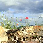 Wall with poppies by Katy Marriott