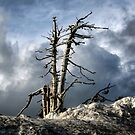 Tree, Sky, & Snow by ZWC Photography