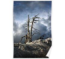 Tree, Sky, & Snow Poster
