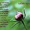 Flower - A Bible Verse A Day