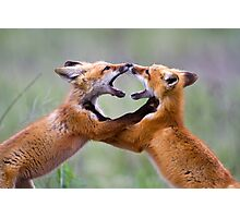 Fox kits at play Photographic Print