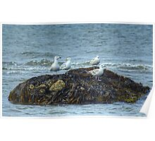Gulls On A Rock Poster