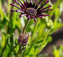 Wild Purple by Katagram