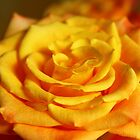 The Language of Roses by karina5